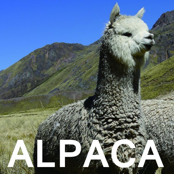 製品案内アルパカ1